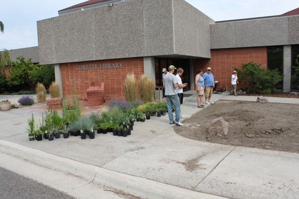 Gardeners working on the native garden space with the Corette Library in the background