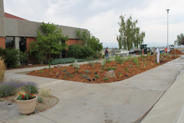 Gardeners work on finishing up the native plant garden