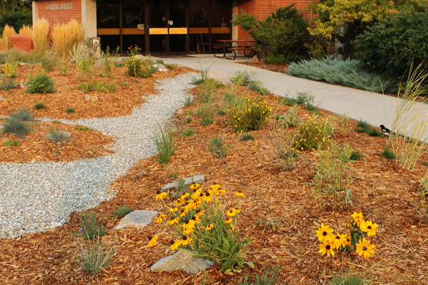 Close up of the Montana Native Plant garden by the Corette Library