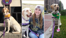 Photos of Anna, the Yellow Lab and her trainer
